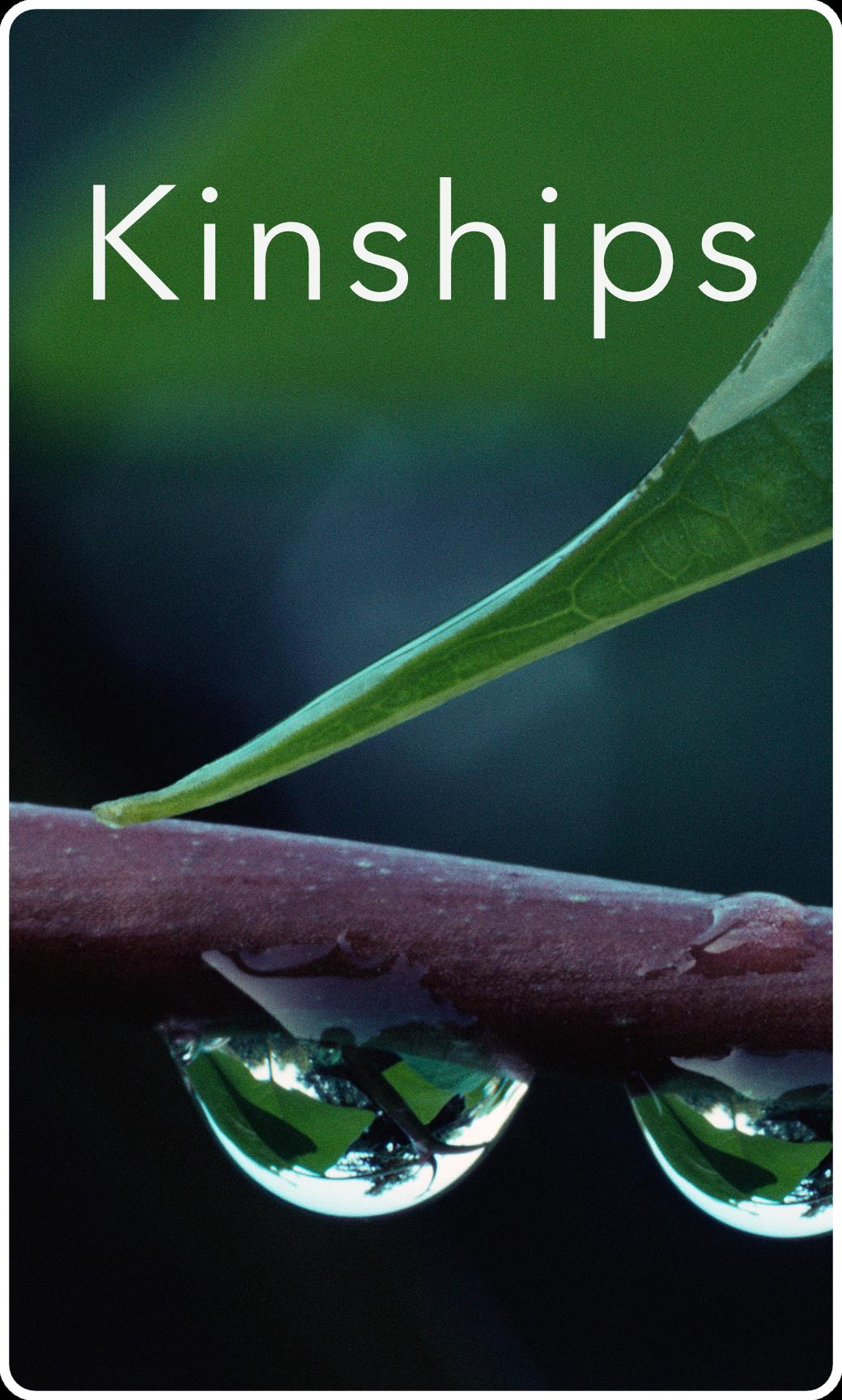 Small Groups Kinships